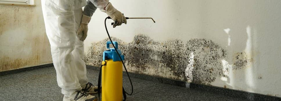 mold remediation in chicago