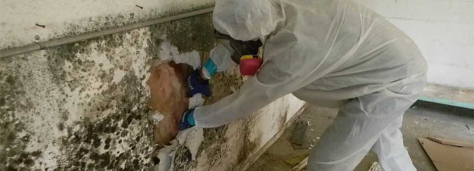 mold-remediation-slide