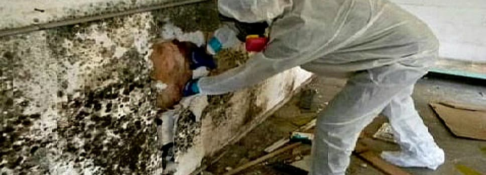 expert inspecting mold on wall