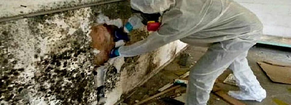 Mold Remediation Diy Crafting