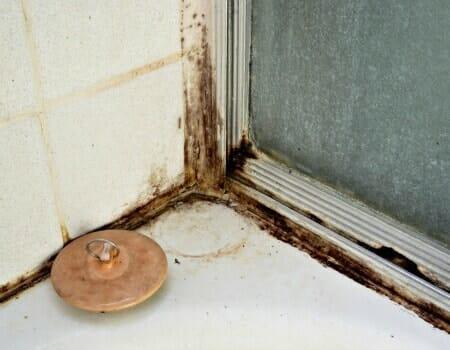 Need mold removal bathroom