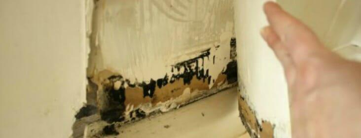 black mold behind wallpaper