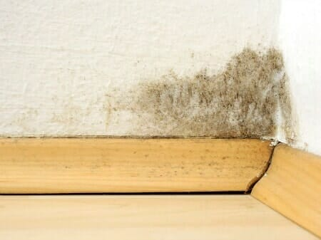 how to detect mold in your apartment