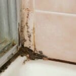 alternaria mold in bathroom