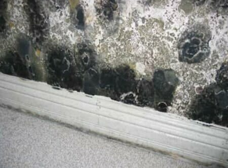 mold vs mildew what are the key differences