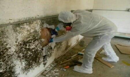 mold inspection expert wall