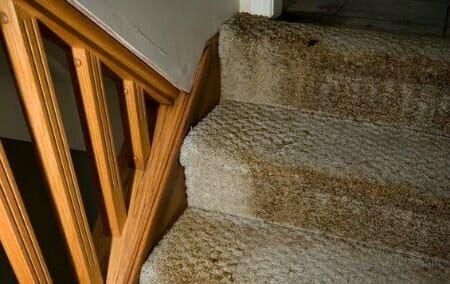 how to dry a wet carpet to avoid mold growth 2 diy steps