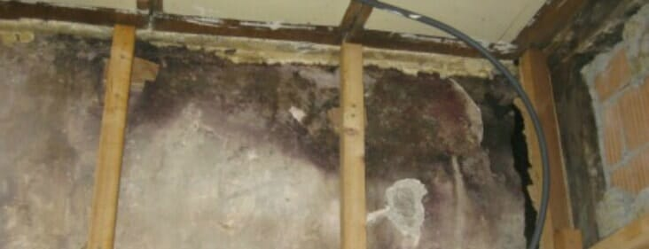 How to deal with mold in walls the definitive guide - How to deal with mold ...