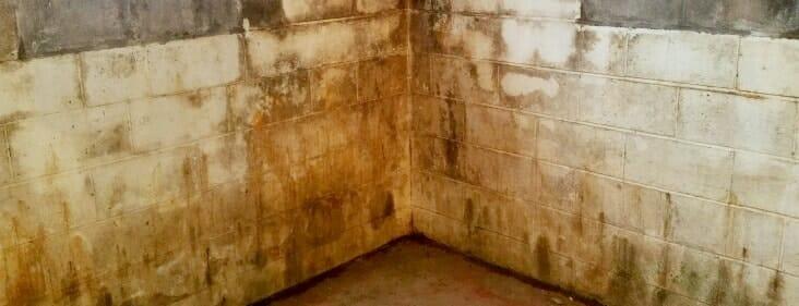 centerblocks mold basement