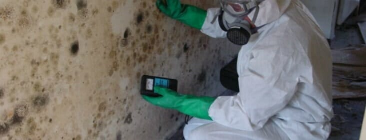 mold inspector in chicago, illinois