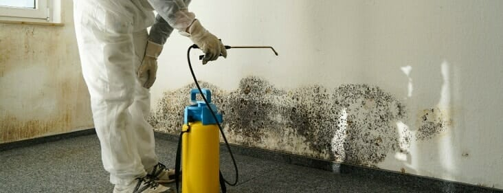 Mold Remediation For Chicago Amp Suburbs Servicemaster By Zaba