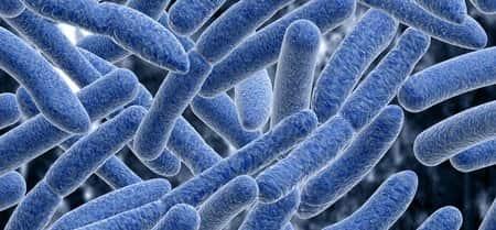 bacteria body tissue