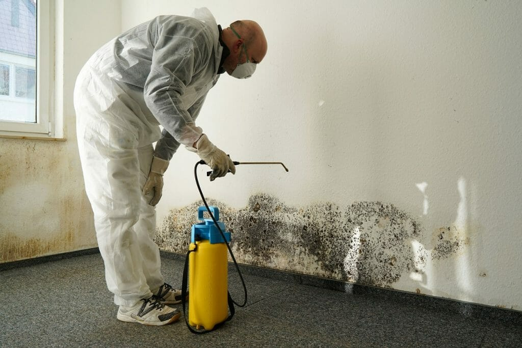 chicago mold remediation professional