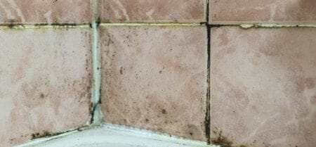 black mold on grout