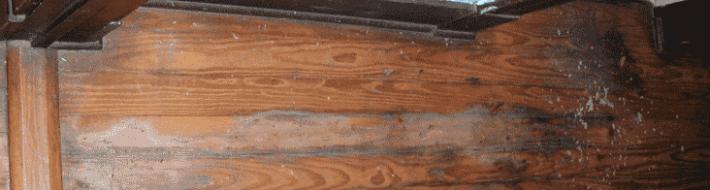 wood floor buckling warped
