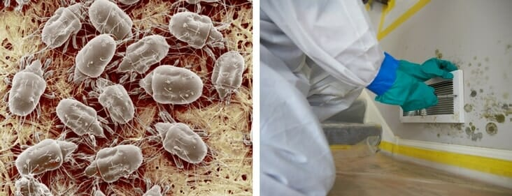 How to Get Rid of Mold Mites: A Definitive Guide