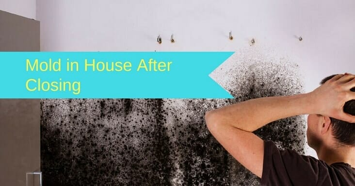 You Bought A House With Mold Problems 5 Things Need To Do Now