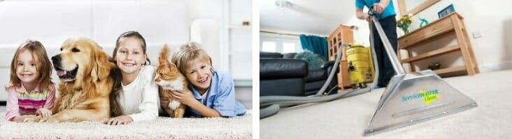 carpet cleaning by servicemaster in skokie