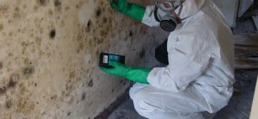 mold inspection in chicago