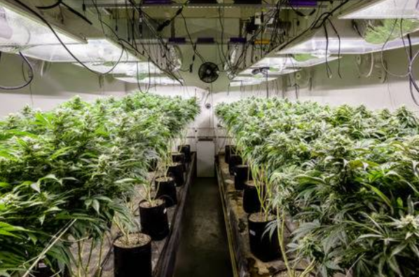 clean grow room in chicago, il