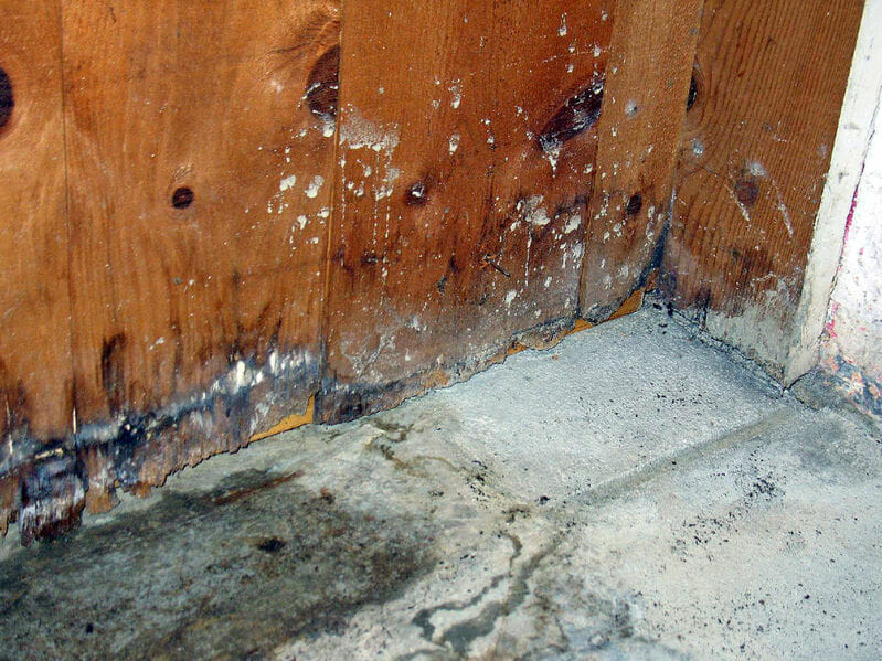 mold in basement wall