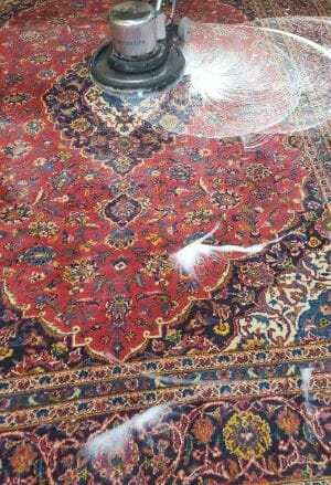 rug cleaning service evanston, il